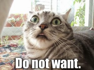 cat_do_not_want[1]